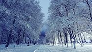 2020 Winter Specials Image